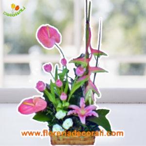 Anthurios tulipanes lilis en canasta.