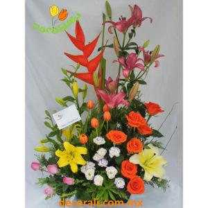 Tulipanes rosas y lilis