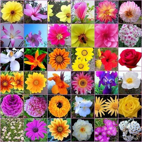 Leguaje de las flores